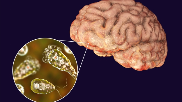 Researchers Synthesize New Drugs to Treat Brain-Eating Amoeba Infections –  PharmaLive
